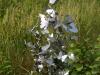 rvs vlinderwolk